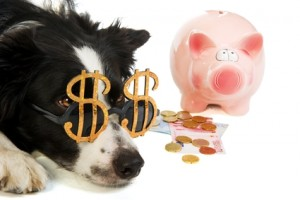 $5.00 coupon for Georjeans dog grooming and self-service pet wash