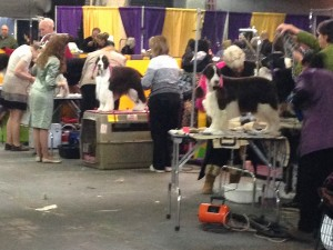 Westminster Dog Show benching area