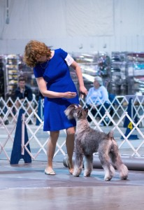 Leslie Shriner with Frodo at the March 2016 Shenandoah Valley Kennel Club Working Group Competition